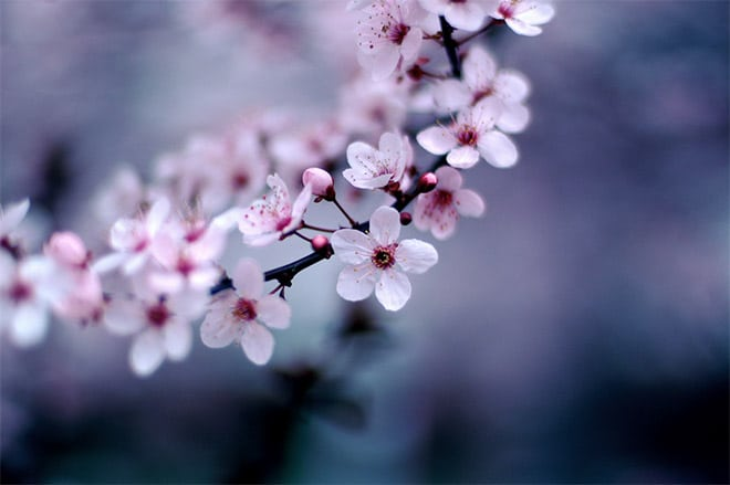 7 Ideas for Spring Photography Projects