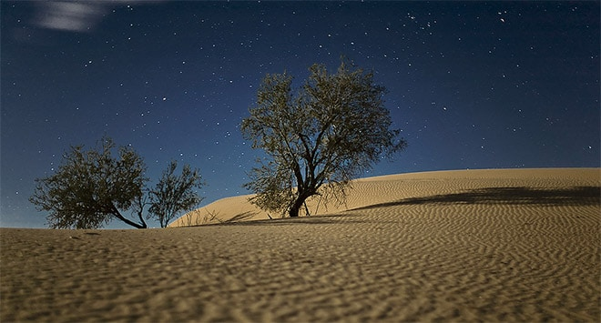 Tree in Dunes by Dan Eckert