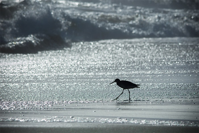 Creating Compelling Silhouette Photography