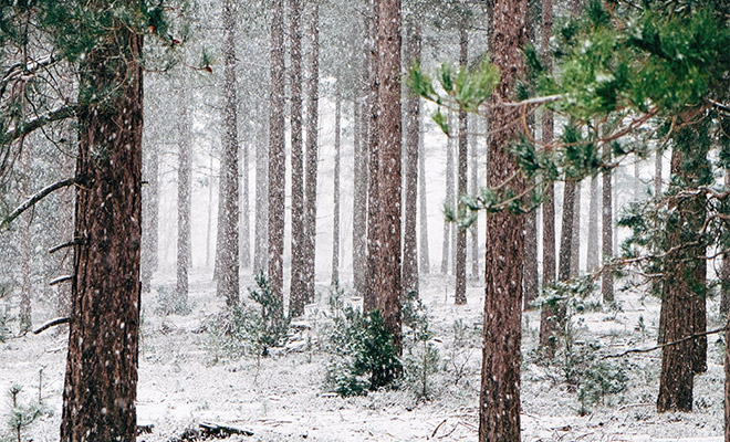25+ Winter Landscape Photos for Your Inspiration