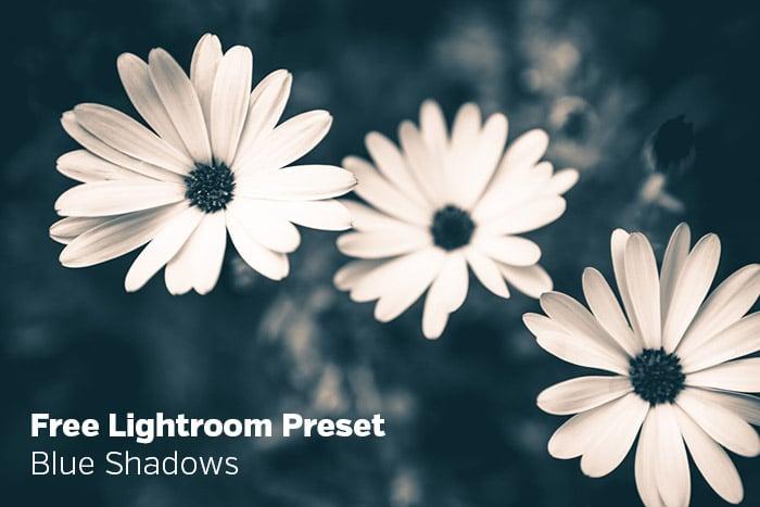 Free Lightroom Preset: Blue Shadows