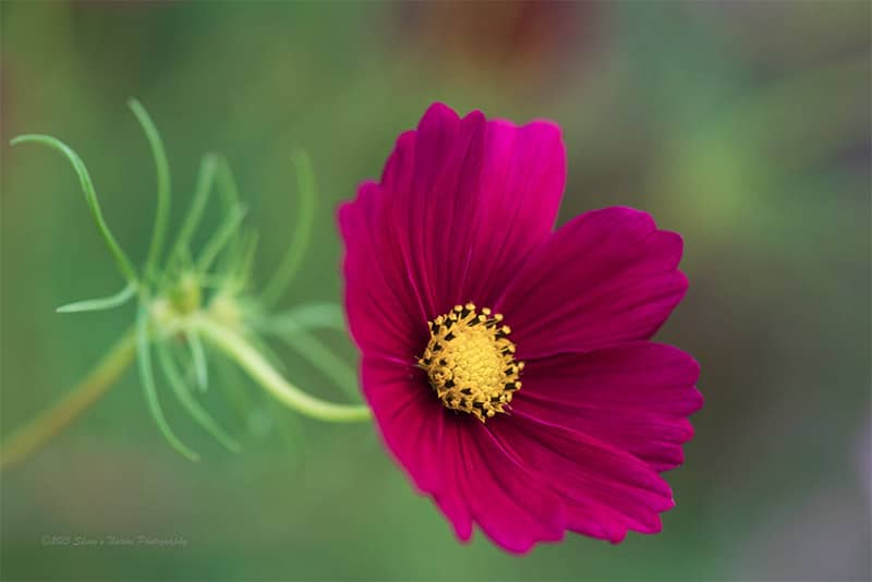 What Lens Should You Use for Flower Photography? The Answer Might Delight You