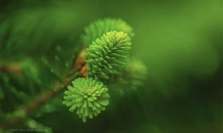 Photographing Macro Moments:  5 Tips