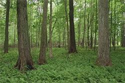 Big Oaks National Wildlife Refuge