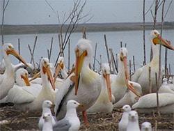Chase Lake National Wildlife Refuge