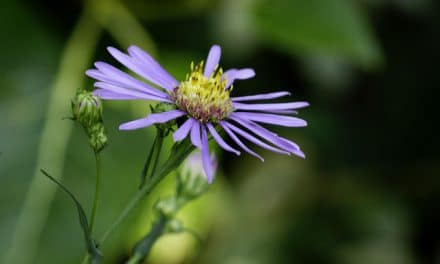 8 Tips for Photographing Plants and Wildflowers