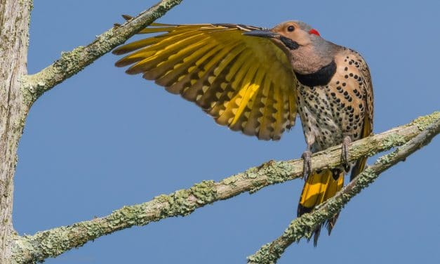 "Bird Photography: How to ""Get the Shot"""