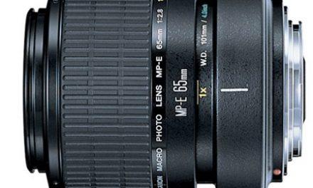 Reviews of the Best Macro Lenses for Canon DSLRs