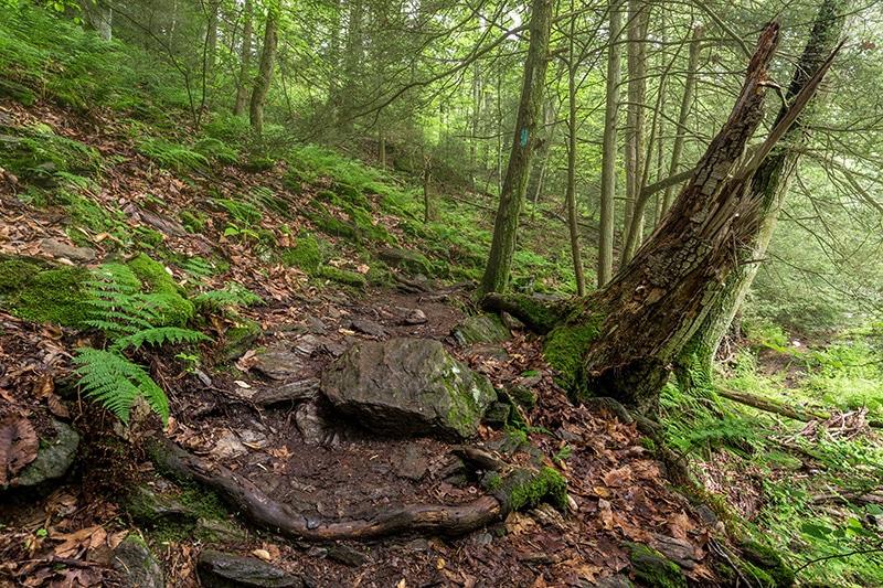 Photographing the Tucquan Glen Nature Preserve